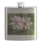 Redbud in MO Cercis canadensis f Flask