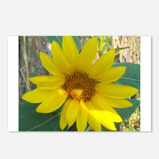 Sunshine in the Garden Postcards (Package of 8)