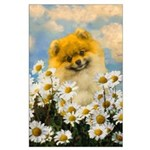 Pomeranian in Daisies Large Poster
