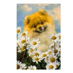 Pomeranian in Daisies Postcards (Package of 8)