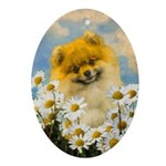 Pomeranian in Daisies Oval Ornament