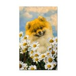 Pomeranian in Daisies Rectangle Car Magnet
