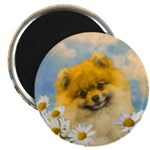 Pomeranian in Daisies Magnet