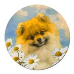 Pomeranian in Daisies Round Car Magnet