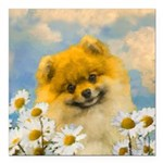 Pomeranian in Daisies Square Car Magnet 3