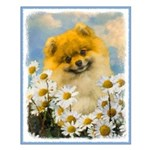 Pomeranian in Daisies Small Poster