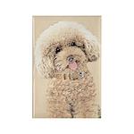 Poodle Rectangle Magnet (100 pack)