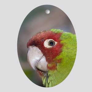 Parrot Oval Ornament