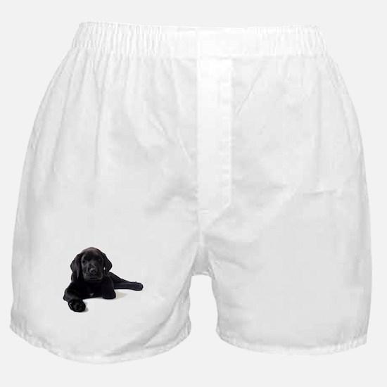 Labrador Retriever Boxer Shorts