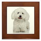 Dog bichon frise Framed Tiles