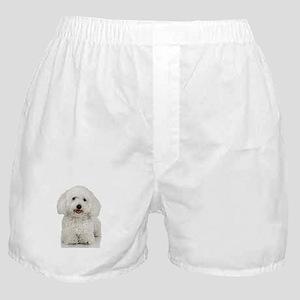 Bichon Frise Boxer Shorts