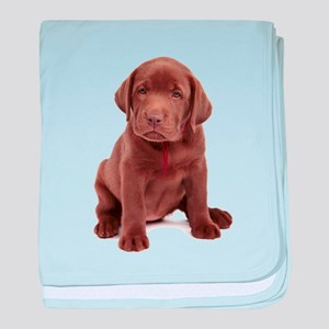 Chocolate Labrador Puppy baby blanket