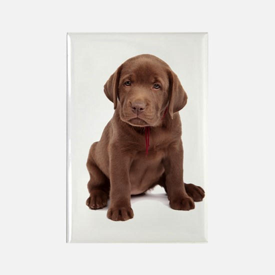 Chocolate Labrador Puppy Rectangle Magnet