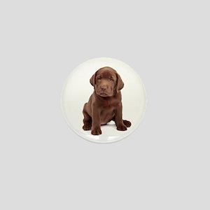 Chocolate Labrador Puppy Mini Button