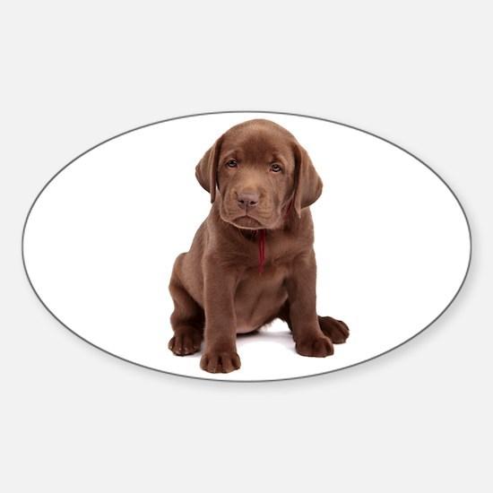 Chocolate Labrador Puppy Sticker (Oval)