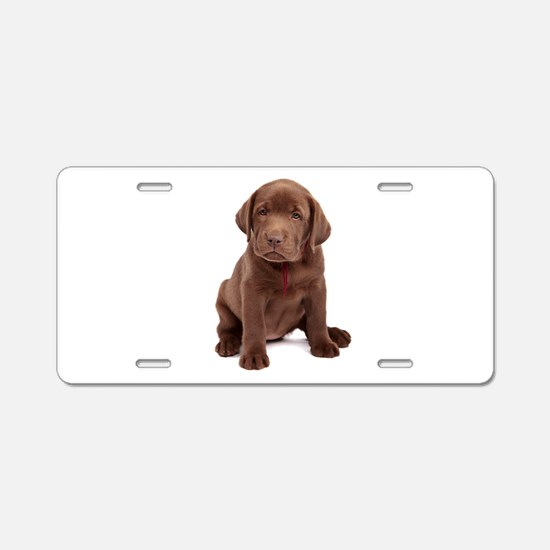 Chocolate Labrador Puppy Aluminum License Plate