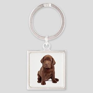 Chocolate Labrador Puppy Square Keychain