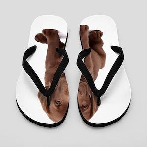 Chocolate Labrador Puppy Flip Flops