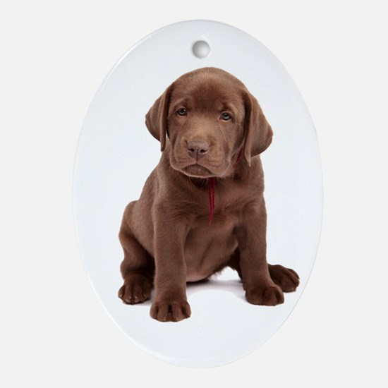 Chocolate Labrador Puppy Ornament (Oval)