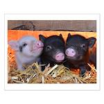 THREE LITTLE PIGS Poster Design