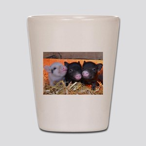 THREE LITTLE PIGS Shot Glass