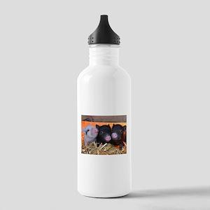 THREE LITTLE PIGS Sports Water Bottle