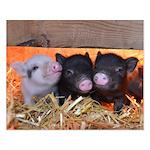 Three Little Piggies Poster Design