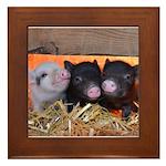 Three Little Piggies Framed Tile