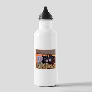 Three Little Piggies Sports Water Bottle