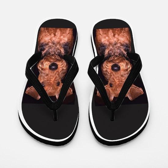 airedale Flip Flops