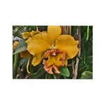 Yellow Cattleya Orchid Rectangle Magnet (10 pack)