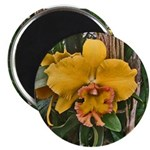 Yellow Cattleya Orchid Magnet