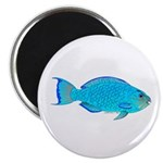 Blue Parrotfish f Magnet