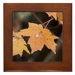 Orange Maple Leaf Framed Tile