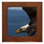 Eagle over the Georgia Straight