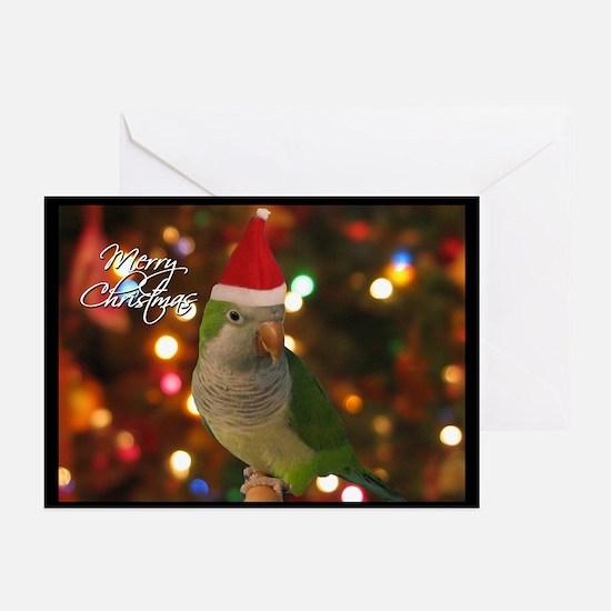 Quaker Parakeet Christmas Cards (10 Pk)