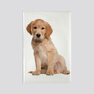 Golden Retriever Rectangle Magnet