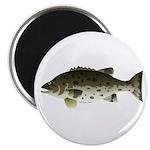 Giant Black Sea Bass fish Magnet