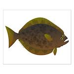 Halibut fish Posters
