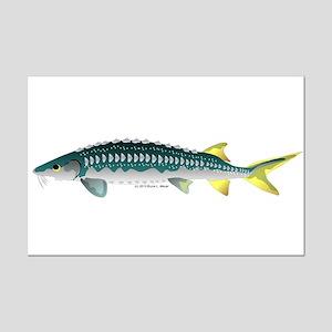 White Sturgeon fish Posters