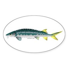 White Sturgeon fish Sticker