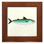 Mackerel Pacific Atlantic or Frigate F Framed Tile