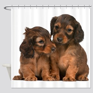 Longhaired Dachshund Siblings Shower Curtain