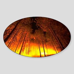 Forest Fire Oval Sticker