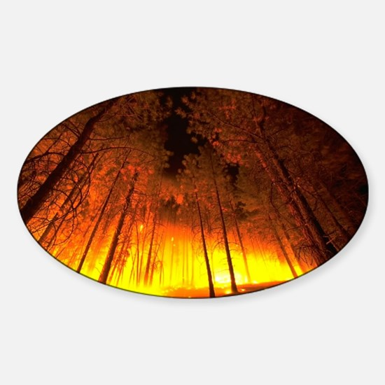 Forest Fire Oval Decal