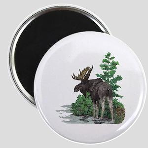 Bull moose art Magnet