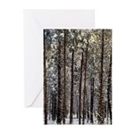 Happy Holidays Greeting Cards (Package o