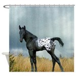Appaloosa Colt Shower Curtain