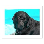 Black Lab image on Small Poster