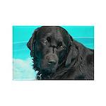 Black Lab image on Rectangle Magnet (10 pack)